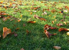 Herbstblätter auf grünem Rasen