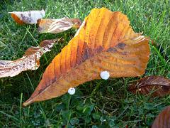 Herbstblatt und Blümchen