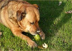 Dana adore les poires...