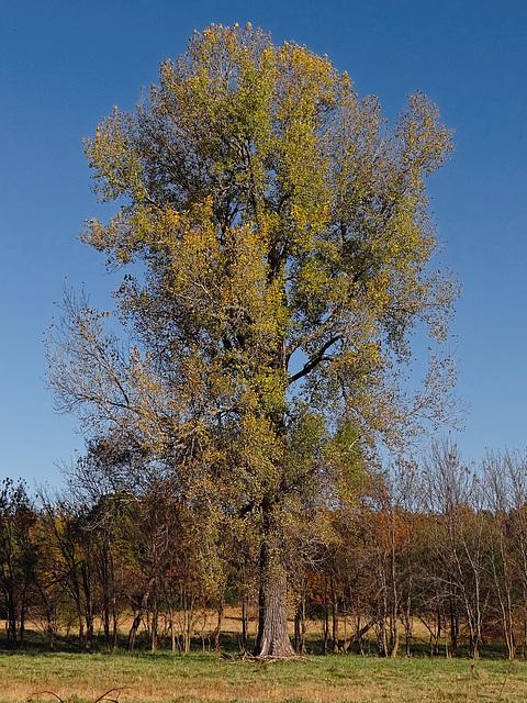 Her Autumn Dress 7-11-2014  This Beautiful Tree