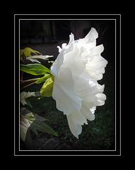 mes fleurs, naissance