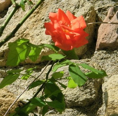 Sur mur de pierres