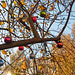 weihnachtskugeln-1200251-co-26-11-14