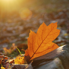 Herbstlichtfarbenzauber