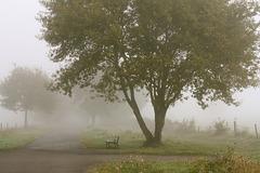 Le banc et l'arbre