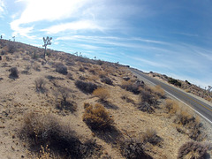 Near Jumbo Rocks (143203)