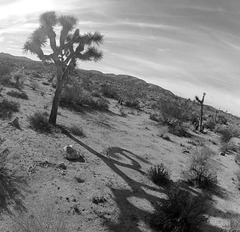 Near Jumbo Rocks (143433)