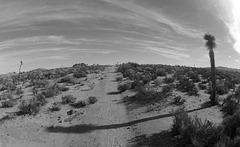 Near Jumbo Rocks (144028)