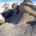 Near Jumbo Rocks (153744)