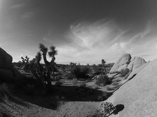 Near Jumbo Rocks (153844A)