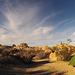 Jumbo Rocks Campground (155024)