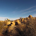 Jumbo Rocks Campground (155045)