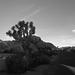 Jumbo Rocks Campground (155313)