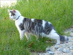 (Curieux et attentif) Nom d'un chat la belle souris que voilà ! :o))