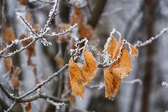 Преддверие зимы. Prévision de l'hiver.