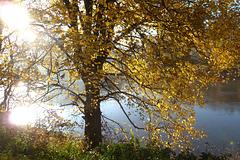 Herbstliche Stimmung an der Elbe - matena etoso sur la Elbe