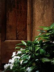 flowered old door