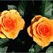 Duo Orange ( Photo Tableau à voir en grand = cliquer dessus )