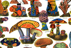 'shrooms party like it's 1967