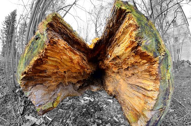 Holzspalterei