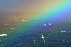 The Albatross and the Rainbow
