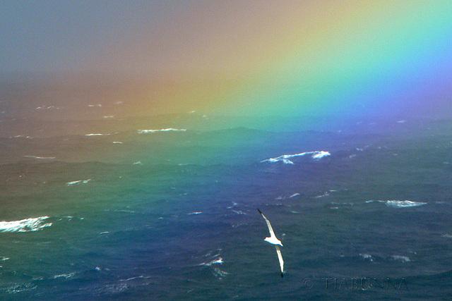 The Albatross and the Rainbow