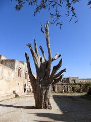 Olivenbaum mit Munition (Pfeil)