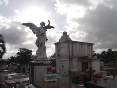 L'ange interdit / The forbidden angel