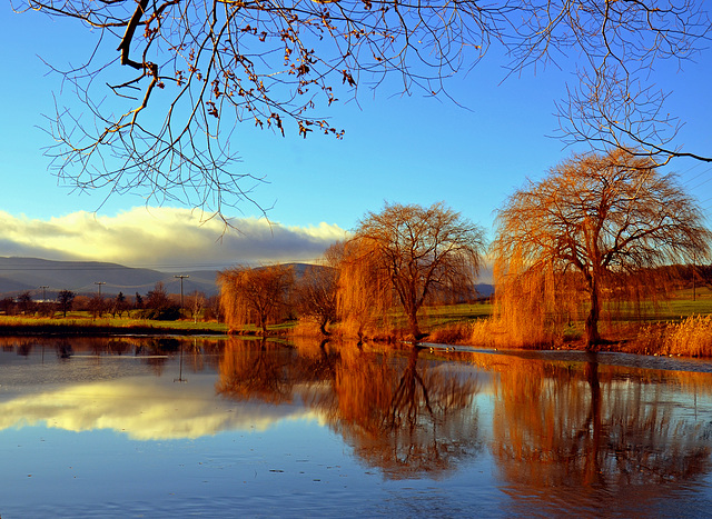 Weiden am Teich