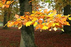 la danse de l'automne