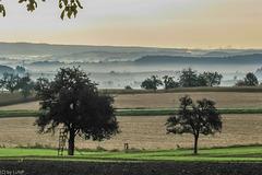 Nebel über den Tälern - Herbst im Kraichgau