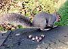 Grey squirrel (2 of 3).