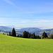 Blick von Hochlitten/Riefensberg zum Bodensee............