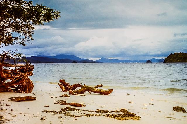 Driftwood on the Beach, Pulau Langkawi, Malaysia 1995