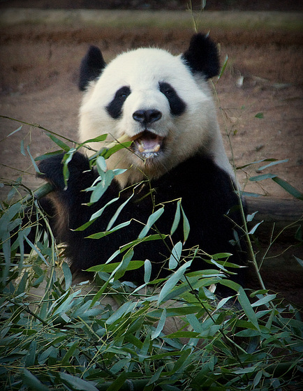 Bamboo makes me happy!