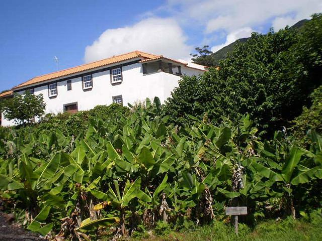 Bananas plantation.