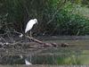 Egret worship