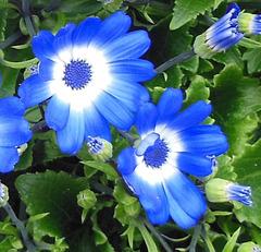 Beaux rêves bleus / Sweet blue dreams