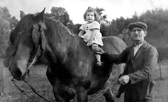 Hue dada sur le cheval de grand-papa