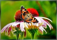 Real butterfly on virtual flower. ©UdoSm