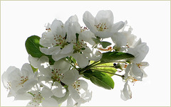 Happy Springtime...