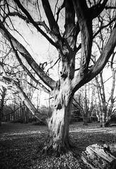 A tree in Lamer Wood