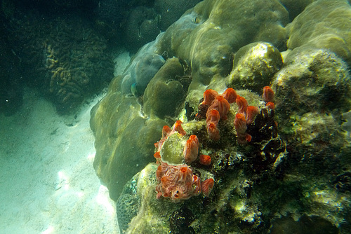 Coral Formation