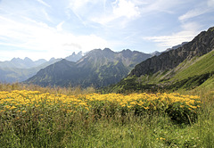 Auf dem Blumenweg bei Oberstdorf