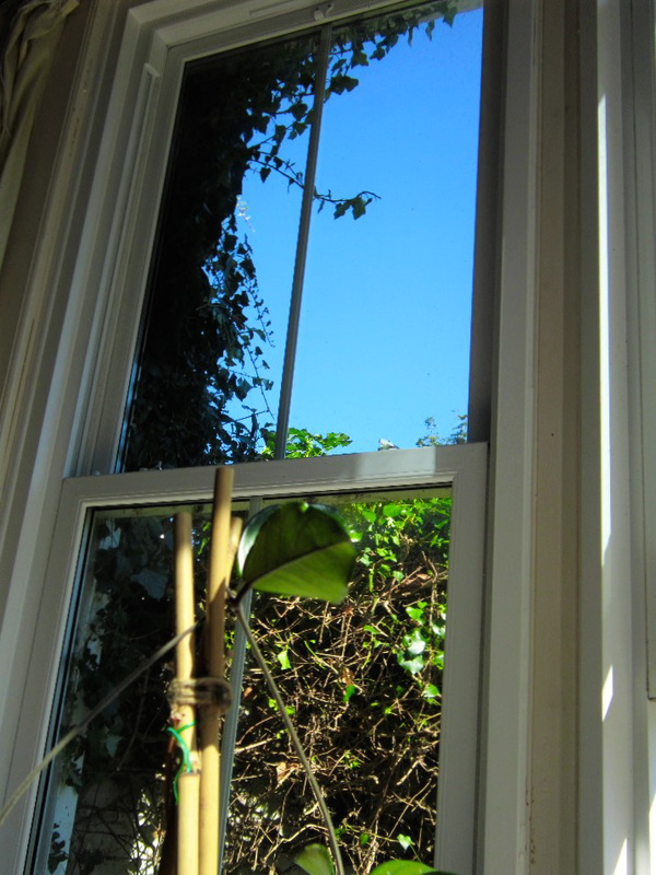 The ivy and hedge is starting to cover the window