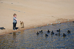 A children, a dog and the ducks