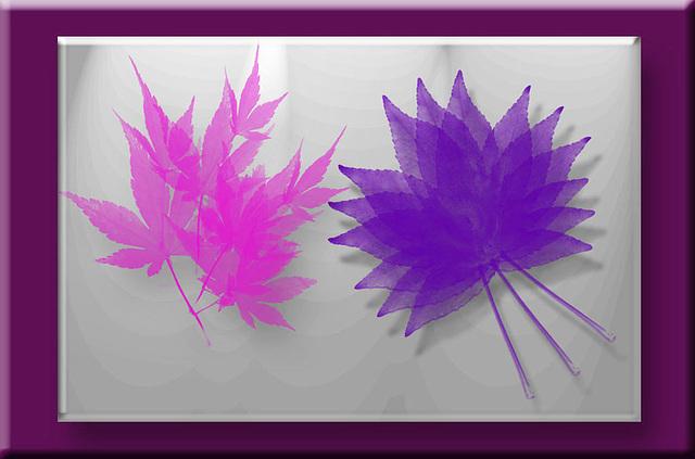 pink & purple leaves