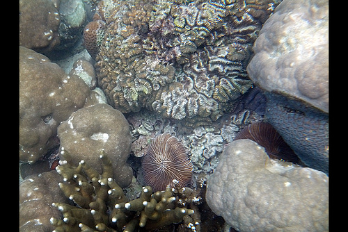 More Coral Formations