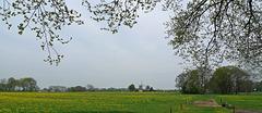 Nederland - Apeldoorn, Wenumse Enk