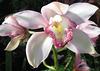 Elegance in Bloom (Explored)